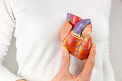 Female hand holding heart model in front of chest. Female hand showing artificial heart model in front of body Stock Image