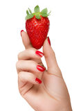 Female Hand Holding a Luscious Ripe Strawberry Isolated on White. Close up female hand with pretty manicured nails with red nail varnish holding a luscious ripe stock images