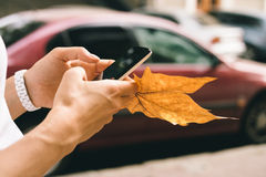 Female hand holding a mobile phone and fallen autumn leaf close- Stock Photo