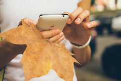 Female hand holding a mobile phone and fallen leaf Royalty Free Stock Photo