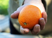 Female hand holding orange. The hand of an elderly woman hands you a ripe orange Royalty Free Stock Photography