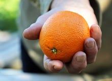 Female hand holding orange Royalty Free Stock Photography