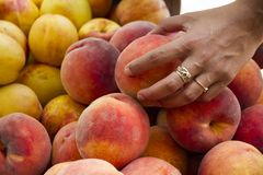 Female hand holding a peach fruit at the top of a pile in the market. fruit prices concept. Female hand holding a peach fruit at the top of a pile in the market Royalty Free Stock Images