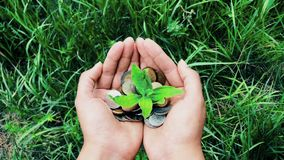Female hand holding pile of coins with growing plant, money finance growth concept stock video footage