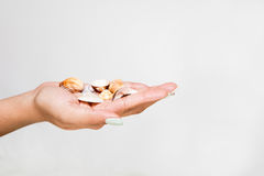 Female Hand Holding Pretty Shells Royalty Free Stock Photography