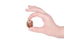 Female hand holding a quail egg. On a white background Royalty Free Stock Photography