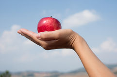 Female hand holding red apple Stock Photography