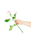 Female hand holding a single red rose isolated Stock Photos