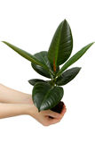 Female hand holding the small plant Royalty Free Stock Image