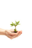 Female hand holding a small tree Stock Images