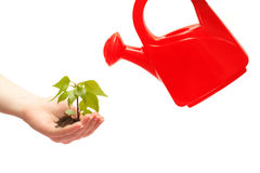 Female hand holding a small tree and watering can. Female hand holding a small tree over white Royalty Free Stock Photography