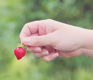 Female hand holding a strawberry Stock Photo