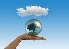 Female hand holding tree in globe Stock Photo