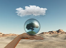 Female hand holding tree in globe Stock Photo
