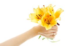 Female hand holding yellow madonna lily bouquet royalty free stock photography