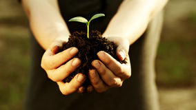 Female hand holding a young plant. With soil Royalty Free Stock Photography