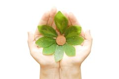 The female hand holds leaves and a coin. The female hand hold leaves and  coin Royalty Free Stock Photography