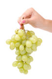 The female hand holds one grapes Stock Photography