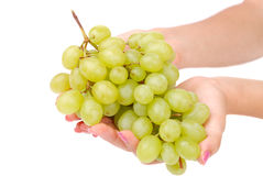 The female hand holds one grapes Stock Photos