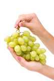 The female hand holds one grapes Royalty Free Stock Image