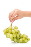 The female hand holds one grapes Stock Images