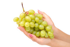 The female hand holds one grapes Stock Photo