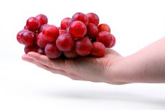 The female hand holds one grapes. Royalty Free Stock Photos