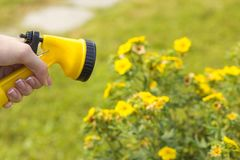 A female hand holds a sprayer for watering plants royalty free stock photography