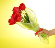 Female hand keeps bouquet of tulips Stock Image