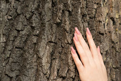 Female hand with long nails touching tree Stock Photo