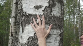 The female hand moves along a birch trunk in the birch wood stock footage
