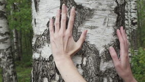 The female hand moves along a birch trunk in the birch wood.  stock video footage