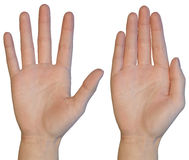 Female hand palm Stock Image