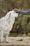 Female hand patting dog head Royalty Free Stock Photography
