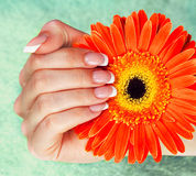 Female hand with perfect french manicure Royalty Free Stock Image