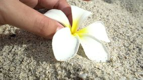 Female hand pick up white flower in the sand, concept ecology, green earth disaster destroyed, global warming, dry. Female hand pick up flower in the sand stock footage
