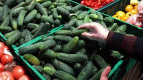 Female hand picking cucumbers in market. Closeup concept of selection and buying fruit or green vegetable.