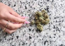 Female hand picking up weed. Off the counter royalty free stock photo