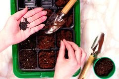 Female hand planting seed in soil. Top viewe Royalty Free Stock Photography