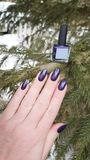Female hand with purple long nails and nail polish bottle. Female hand with purple long nails manicure and nail polish bottle stock image