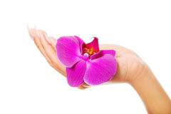 Female hand with purple orchid petal Royalty Free Stock Photos