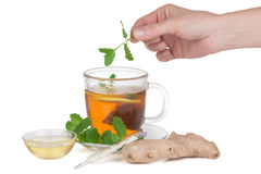 Female hand puts in the tea leaves of mint Stock Photography