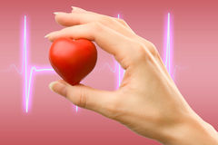 Female hand with red heart. Carefully holding royalty free stock image