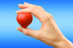 Female hand with red heart. Carefully holding royalty free stock photo
