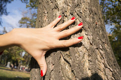 Female hand with red nail polish on tree trunk Royalty Free Stock Image