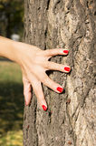 Female hand with red nail polish on tree trunk Royalty Free Stock Images