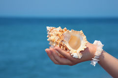 Female hand with seashell on seacoast Royalty Free Stock Image