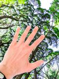 Female hand stretches up to trees, ive, natural photo stock image