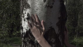 The female hand strokes a birch trunk stock video