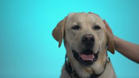 Female hand stroking beautiful pedigreed dog in adoption center, best friend stock video footage